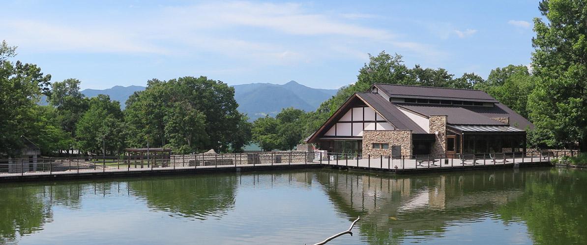 金川の森の風景写真